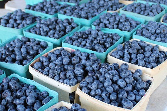 close up of blueberries in cartons at Glenview Farmers Market