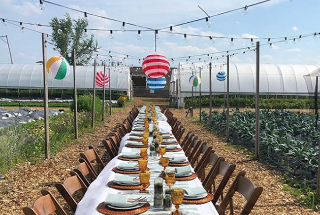 Formal Outdoor dinner on a farm with twinkle lights and colorful lanterns above, Talking Farm, Skokie