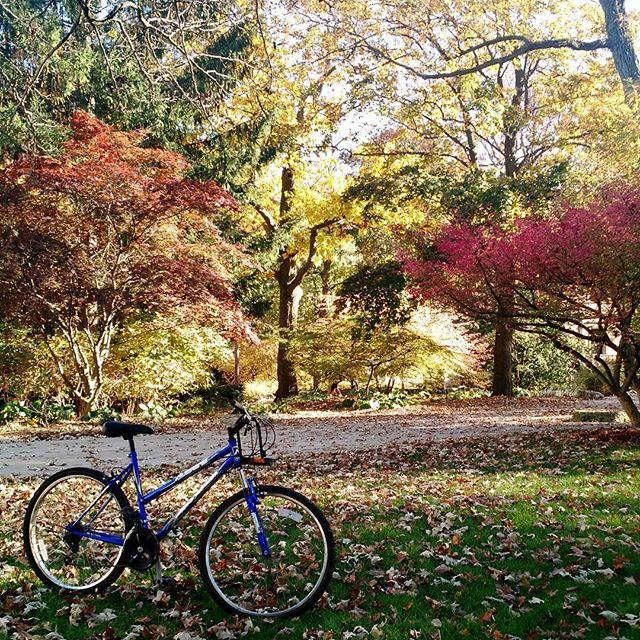 Bike with Fall Colors