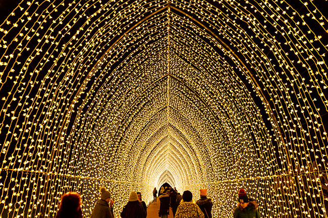 Lightscape, Chicago Botanic Garden, Glencoe