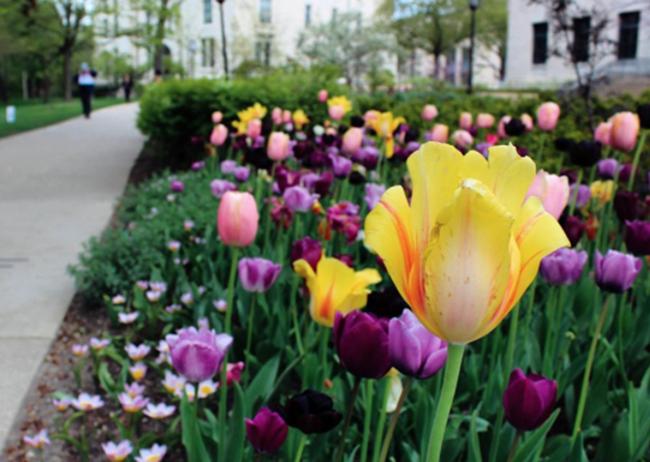 Northwestern University, Evanston